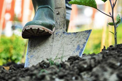 Maintenance/ Gardening